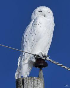 Beautiful Owl, Animals Beautiful, Cute Animals, Owl Photos, Owl Pictures, Exotic Birds, Colorful Birds, Felt Owls, Owl Bird