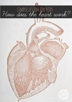 Human Heart for Kids:  Simple lesson on How the Heart Works
