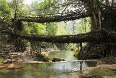 Living Root Bridges in India Aren't Built, They're Grown | Mental Floss