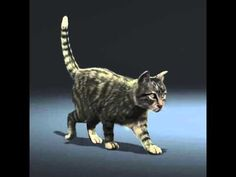 Cat Walk Cycle - New Rigs For VFX Creature Animation School - YouTube Animation Mentor, Animation Schools, 3d Animation, F2 Savannah Cat, Savannah Chat, Cat Reference, Cat Whisperer, Cycling News, Traverse City