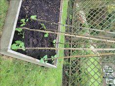Growing a bean tee p