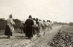 Polish immigrants walk to the public potato patches Mayor of Detroit Pingree established on 430 acres of city land during the panic of 1893 and subsequent depression. Pingree became a national hero for the idea, and the potato patch program was copied in other major cities.