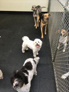 """Just lining up near the fence talking to our friends!"" #NoReason #DogFriends #DoggieDaycare #BecauseWeCan"