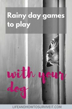 What can you do if you can't take your dog out in the rain? Here are some rainy day games to play with your dog, inside. No wet paws in sight... Games To Play Indoors, Games To Play Inside, Family Games To Play, Water Games For Kids, Rainy Day Games, Rainy Day Activities, Dog Activities, Summer Activities For Kids, Indoor Activities