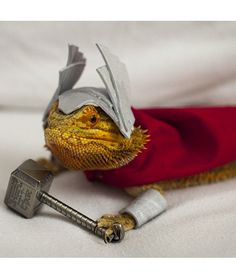 The Bearded Dragon Is The Coolest Reptile In The World - Exotic Bearded Dragons Bearded Dragon Costumes, Bearded Dragon Funny, Bearded Dragon Cage, Cute Reptiles, Reptiles And Amphibians, Os Pets, Cute Lizard, Pet Dragon, Pet Costumes