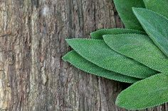 The 5 Surprising Superpowers of Sage | For eczema, poor digestion, greasy hair, breakouts and B.O. | The Dr. Oz Show