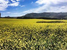 Primavera nell'aria entroterra agrigentino #Sicilia