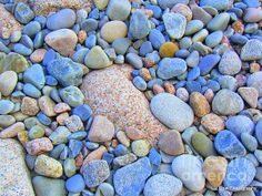Speckled Stones. Acadia National Park Maine