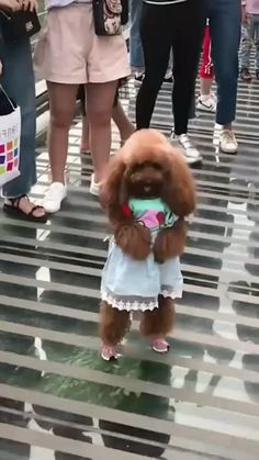 top funny dogs #4
