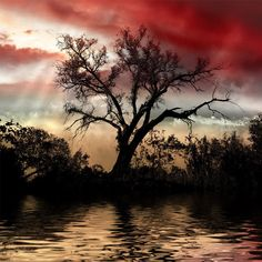 African Ruby Sky
