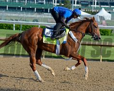 Caption: Frammento<br /> Horses on the track at Churchill Downs on Sun. April 29, 2015, in Louisville, Ky., in preparation for the Kentucky Derby and Kentucky Oaks.<br /> Wed4_29 Edit image793<br /> Photo by Anne M. Eberhardt
