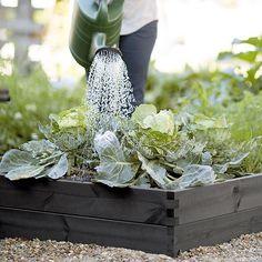 Have for alle  Dyrk grøntsager i højbede i baghaven. Højbedet rummer stor jordvolume og sikrer en højre jordtemperatur så du kan starte dyrkningssæsonen tidilgere. Højbedet er sammentappede sortbejset fyr og giftfri selvfølelig. Pæne nemme at samle og kan stables. PRE-SALG RABAT 15% denne måned  fri fragt over 500:- >> link i profilen  #hasselforsgarden #urbangardening #justaddwater #urbangard #urbangardencompany  #dyrkbyen #byhave #raisedbeds #growyourown #growfood #slowfood #altanliv…