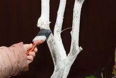 Comment réaliser un badigeon pour protéger le tronc ?   Page 2