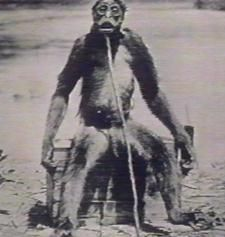 This creature was killed on the Venezuela/Colunbia border in 1917 by Francois De Loys and his party.  This creature appears to be a very man-like ape.  It has never been identified as a known species.  De Loys group was attack by these creatures and they shot and killed one of them.  The creature was about 5 ft tall and had a very human like appearance and movements.  The size and shape of the creatures forehead show that it isn't even closely related to known primates of S