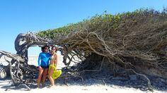 A árvore da preguiça é mais um ponto turístico de Jericoacoara que vale a pena dar uma passadinha.  .  Normalmente quando fazemos o passeio da Lagoa Azul, Lagoa do Paraíso e Pedra Furada os bugueiros passam pela Árvore para tirarmos algumas fotos.  .  👙@phpraia  .  #jericoacoara #jeri #ceara #phpraia #brasil #gopro #goprobrasil #goprohero4 #meudome #viajando #brasil #blognossaviagem #gpmundo #selfie #destinosnacionais #partiupelomundo #queroviajarmais #selfiepelomundo #viajandocomgabi…