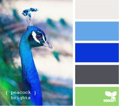 For Peacock Fans :) White, sky blue, cobalt, charcoal grey, and light green. Peacock Brights Color Palette from Design Seed.