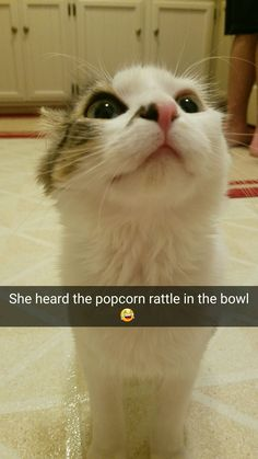Be with someone who loves you as much as Mango loves popcorn