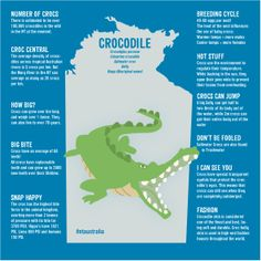 Crocodiles are found throughout the Northern Territory's Top End. There are a number of great tours around Darwin and Kakadu that let you see these amazing creatures up close in a safe environment. #NTAustralia #infographic