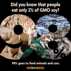 "Did you know that people eat only 2% of GMO soy? 98% goes to feed animals and cars. It is true. ""The GMO industry claims that GMOs are needed to feed the world. Look at any of their websites and you'll see this claim as a defense of their agricultural methods. But it's simply not true."" -Vandana Shiva  Share this post and share the truth! Read more here on GMO Insidee: http://gmoinside.org/news/the-economic-argument-against-gmos-a-top-ten-list #GMOs #CAFOS #AnimalFeed"