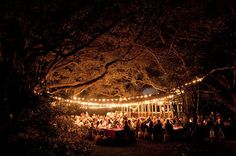 String lights with a canopy effect