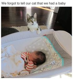 25 Funny Cat Pictures