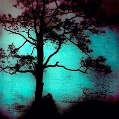 Nocturno 0