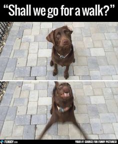 Shall we go for a walk? (Funny Animal Pictures) - #dog #face #walk Order an oil painting of your pet now at www.petsinportrait.com