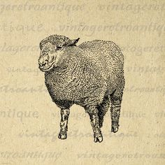 Printable Southdown Ram Sheep Graphic Digital Illustration Image Download Vintage Clip Art. Vintage printable graphic. This high resolution, high quality digital artwork is great for fabric transfers, printing, papercrafts, tote bags, and more. Real antique art. This digital image is large and high quality, size 8½ x 11 inches. Transparent background version included with every digital image.