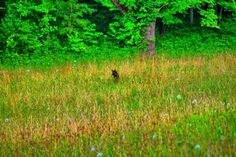 The Allusive Bear In Cade's Cove.