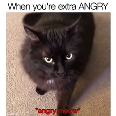 funny cats and dogs ; funny cats can't stop laughing ; funny cats and dogs videos ; funny cats with captions Funny Animal Memes, Funny Animal Videos, Cute Funny Animals, Funny Animal Pictures, Cute Baby Animals, Funny Dog Sayings, Funny Cat Quotes, Clean Animal Memes, Cat Memes Hilarious