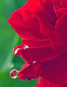 danalynn1961 | Barely hanging on | opposite complimentary colors + red green flower waterdrop macro