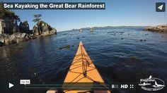 Great Bear Rainforest Kayak Expedition