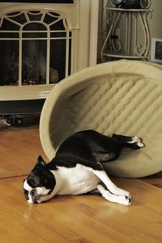 Some dogs sure sleep around! #dogs #pets #BostonTerriers Facebook.com/sodoggonefunny