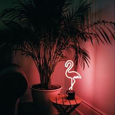 Flamingo Lamp   Portra 400 .  .  .  .  .  .  .  .  .  .  .  .  .  .  .  .  .  .  .  .  .  .  .  .  .  .  .  .  .  .  #colour #color #canada #ontario #filmsnotdead #filmphotography #filmisnotdead #film #35mm #slvrfeed #analogphotography #analog #leica #lei