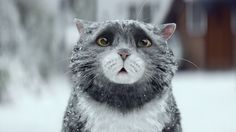 Mog the cat is about to become your new favorite cat character! Sainsbury's 2015 Christmas ad was an instant hit starring Mog, the clumsy cat. I Love Cats, Crazy Cats, Cute Cats, Funny Cats, Funny Animals, Cute Animals, Schnauzer Mix, Miniature Schnauzer, Christmas Adverts