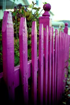 Its so pink White Picket Fence, Picket Fences, Diy Fence, Pink Garden, Good Neighbor, All Things Purple, Everything Pink, Garden Structures, Garden Gates