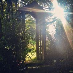 Summer Sun peaking through our garden and special wooden arch Wooden Arch, Summer Sun, Cottages, Northern Lights, Old Things, Seasons, Spring, Garden, Holiday