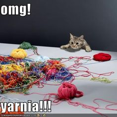 This is how I feel when I walk into a really good yarn store.