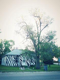 Zebra-striped house in Basset, Nebraska by Cat Rocketship, via Flickr