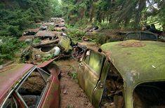 Al meer dan 50 jaar liggen ze daar verstopt in een bos ten zuiden van de Ardennen. Een 200-tal oldtimers overwoekerd door de natuur. De meeste wagens behoorden toe aan Amerikaanse soldaten die in de streek gelegerd waren.