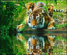 Peaceful tiger .....Click on the link and see an amazing animated reflection