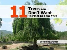 11 Trees You Don't Want To Plant In Your Yard