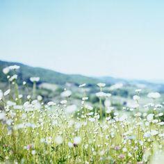 ✽❤︎    meadow