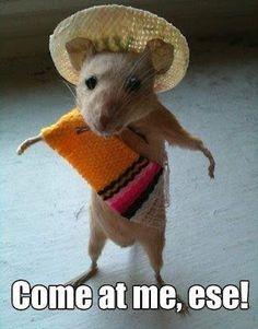 Speedy Gonzales :)