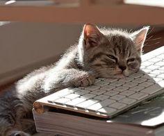 Monday syndrome...