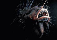 http://thelittlethingsare.com/wp-content/uploads/2010/02/deep-sea-fish.jpg