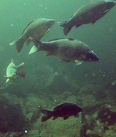 Lomeček - Pro veřejnost Fish, Pets, Animals, Animales, Animaux, Pisces, Animal, Animais, Animals And Pets