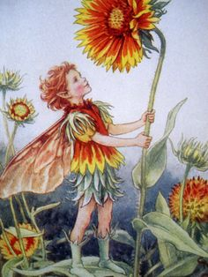 Gaillardia Fairy Cicely  There once was a child in a garden, Who loved all my colours of flame, The crimson and scarlet and yellow - But what was my name?