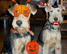 EASY HALLOWEEN--LUCY WOULD CHOW ON FANGS ALREADY!
