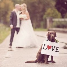 wedding photos with pets.